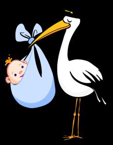 blog stork